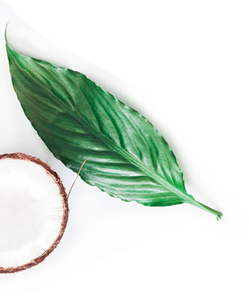 Coconut-and-leaf