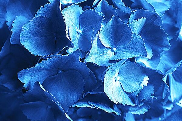 Classic Blue is the Pantone Color of the Year_Blog